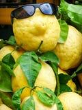 Limón divertido en gafas de sol fotografía de archivo libre de regalías