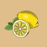 Limón en estilo del vintage Ilustración coloreada del vector Imágenes de archivo libres de regalías
