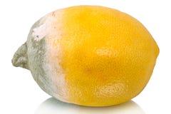 Limón estropeado en blanco fotos de archivo libres de regalías