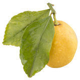Limón fresco con 2 hojas verdes, aisladas Fotografía de archivo libre de regalías