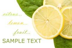 Limón jugoso fresco con las hojas verdes Fotografía de archivo libre de regalías