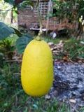 Limón natural srilanqués Foto de archivo libre de regalías