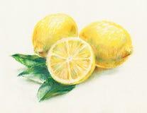 Limones libre illustration