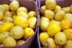 Limões Imagem de Stock