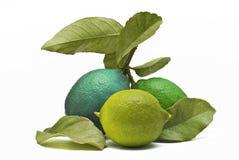 Limões coloridos. Fotos de Stock