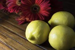 Limões com flores vermelhas Fotos de Stock Royalty Free