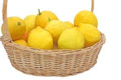 Limões cultivados em casa Fotografia de Stock Royalty Free