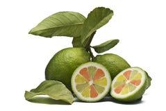 Limões da fantasia. Fotografia de Stock