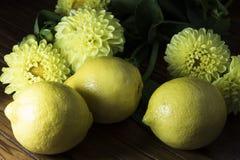 Limões e flores amarelos Fotografia de Stock Royalty Free