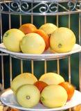 Limões em uma placa branca Imagens de Stock