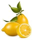 Limões frescos com folhas. Fotografia de Stock Royalty Free