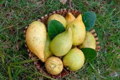 Limões frescos na cesta Fotografia de Stock Royalty Free