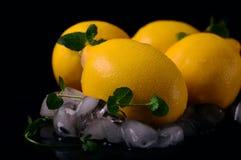 Limões isolados no fundo preto Vista superior Imagem de Stock Royalty Free