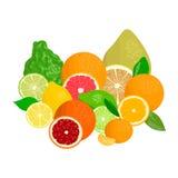 Limões, laranjas e cais Bergamota, limão, toranja, cal, o mandarino, pomelo, laranja, laranja pigmentada com fatias Imagens de Stock Royalty Free