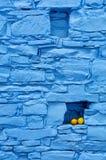Limões na parede azul em Chipre Fotos de Stock Royalty Free