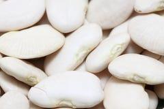 Lima bean Stock Photo
