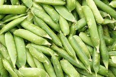 Lima-bean pods Stock Images