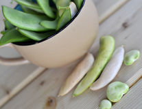 Lima bean pods. Royalty Free Stock Photo