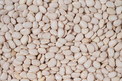 Lima-beans Stock Images