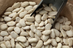 Lima beans Royalty Free Stock Images