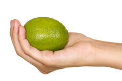 Lima citric Royalty Free Stock Photo