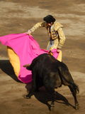LIMA, NOV 2013: Spanish torero Padilla Royalty Free Stock Photo