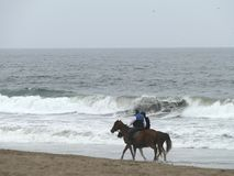 Couple riders on brown horses trotting in Lima coast. Lima, Peru. October 28, 2017. Couple riders on brown horses trotting at coastline of the Pacific Ocean in Stock Photo