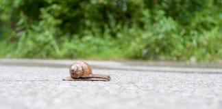 Ślimaczek zdjęcie stock
