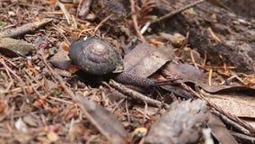 Ślimaczek - Armstrong Redwoods stanu Naturalna rezerwa, Kalifornia, Stany Zjednoczone zbiory wideo