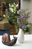 ślimaczek dekoracyjna waza Obrazy Stock