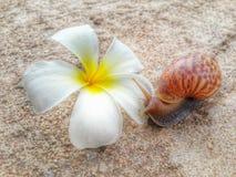 Ślimaczek i kwiat Fotografia Royalty Free