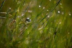 Ślimaczek na badylu trawa Zdjęcia Stock