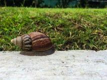 Ślimaczek na cemencie w ogródzie Zdjęcie Stock