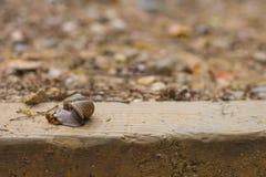 Ślimaczek na desce Zdjęcie Stock