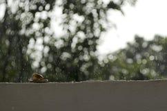 Ślimaczek na deszczowym dniu Fotografia Royalty Free