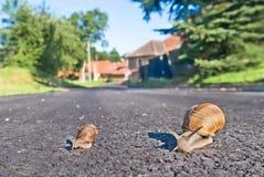 Ślimaczek na drodze Obrazy Stock