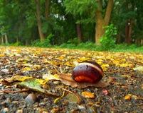 Ślimaczek na drodze Obraz Royalty Free