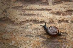 Ślimaczek na kamieniu dla wzoru Zdjęcie Royalty Free