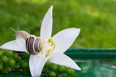 Ślimaczek na kwiacie Obrazy Stock