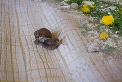 Ślimaczek na tapecie Zdjęcie Royalty Free