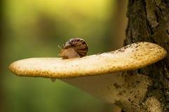 Ślimaczek pieczarka fotografia stock