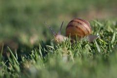 Ślimaczek przy linia brzegowa parkiem Mountain View zdjęcie stock