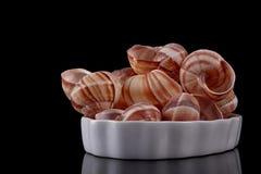 Ślimaczek Shell Fotografia Stock