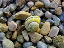 Ślimaczek Shell, Zdjęcia Stock