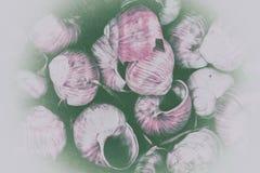 Ślimaczek skorupy Zdjęcie Royalty Free