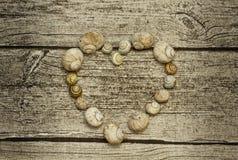 Ślimaczek skorupy serce Zdjęcia Royalty Free
