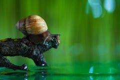 Ślimaczek w lesie Fotografia Stock
