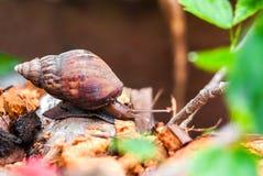 Ślimaczek w ogródzie Zdjęcie Stock