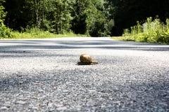 Ślimaczek w ulicie Obraz Royalty Free