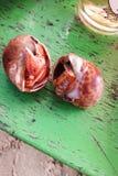 Ślimaczka owoce morza Obrazy Stock